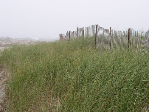 Fence on the dune