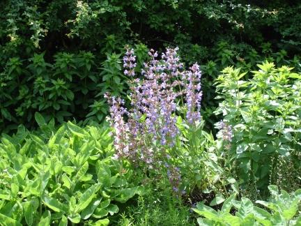 Gartenstrafkolonie
