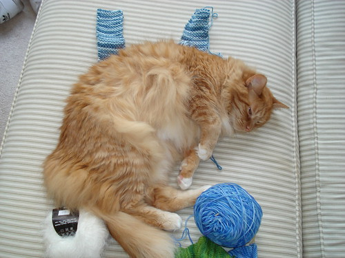 Oscar Sleeping on Knitting