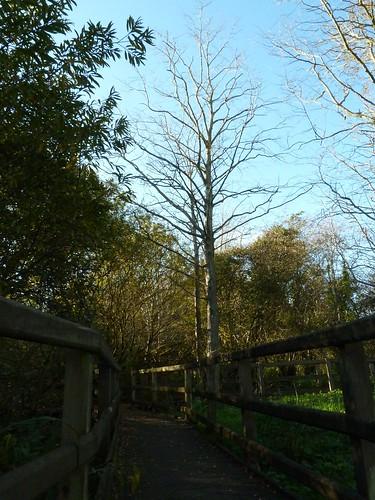 Swamp walk at Castle Espie