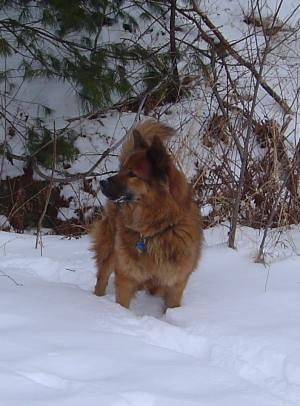 Reggie in the snow, Jan 30, 2004