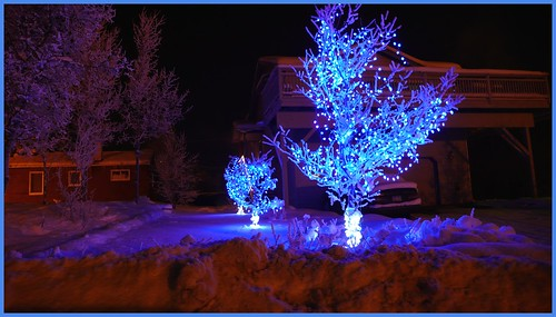 Blue x-mas lights, 13th Ave., Anchorage.