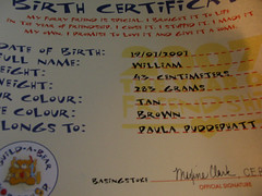 William's Birth Certificate by Paula Bird Parent