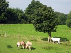 Gruppenbild mit Kuh