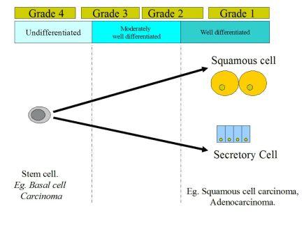 Tumour Grading