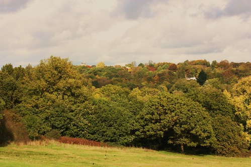 Autumn on Hampstead Heath