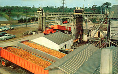 Minute Maid Plant, 1950s
