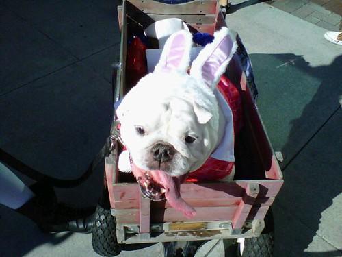 White Rabbit Harley