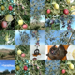 Montilla olives collage12