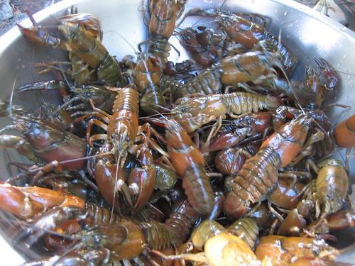 Timothy Lake Crayfish
