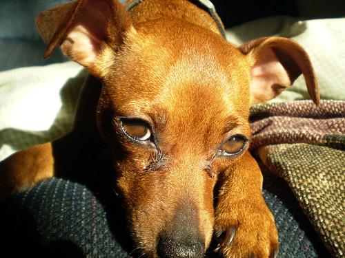 Ginger Close-up