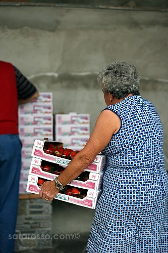 Woman carrying cases of strawberries - Sagra della Fragola, Strawberry Festival in Italy