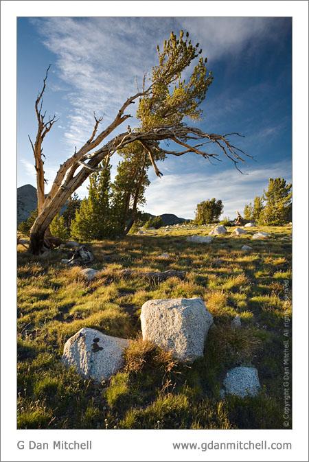 Rocks and Trees, Gaylor Lake