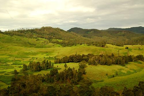 lush green hills