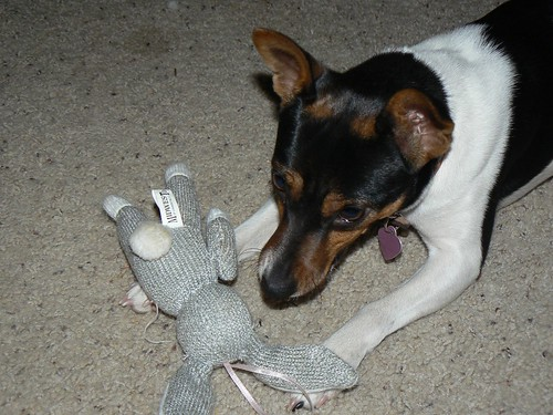 Don't try to grab the rabbit.  It is mine.