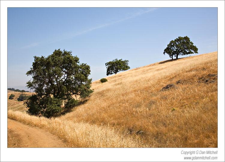 Three Trees, Calero Hills