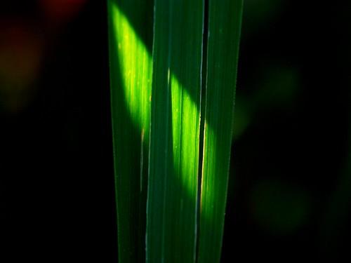Green #9