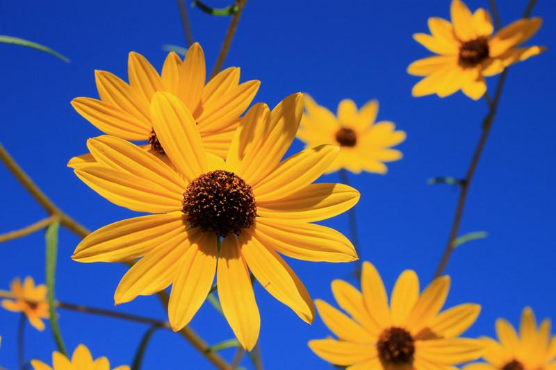 Flower Contrast