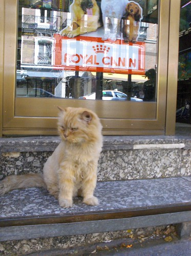 spanish kitty in madrid