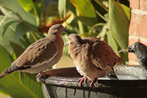 Bird Bath_5625