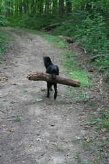 Lolli Carried this Log 1.75 miles