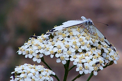 on fennel