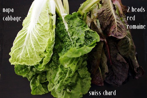 Napa cabbage, Swiss chard, red romaine lettuce