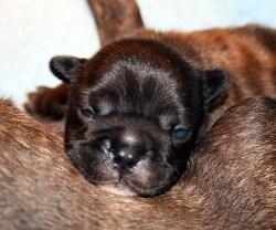 Sleeping on mom's tummy