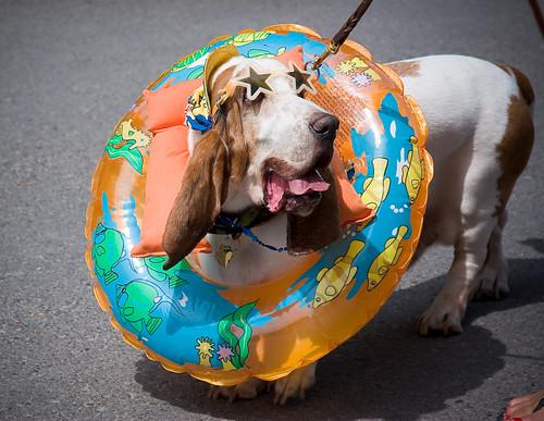 Dog_Parade_3