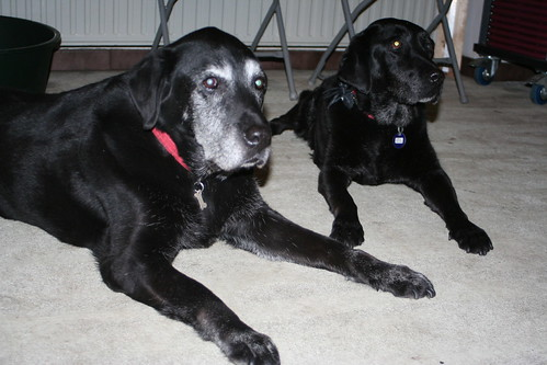 Brother and sister, Eros and Eiko