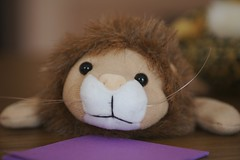 A lion stuffed toy animal