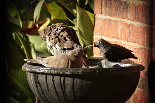 Bird Bath_5610