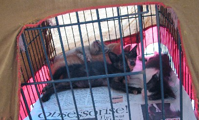 5KittensCommonwealth_20070922_10x