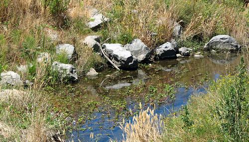 Pinole Creek