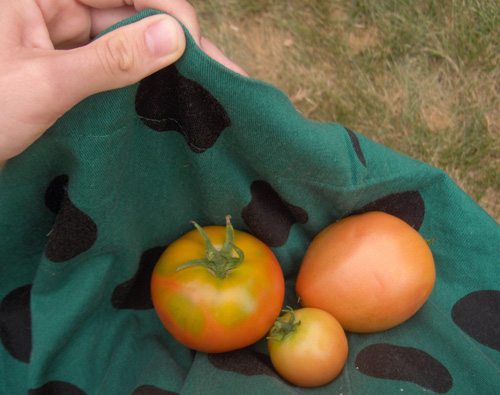 tomato skirt