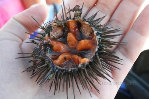 Polpa di Ricci di Mare - Sea Urchin Roe