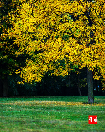 D80-CHI_AutumnTree01-2010_10-11B