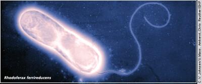 microbe power