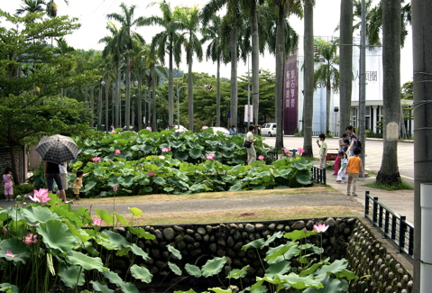 Lotus Pond4