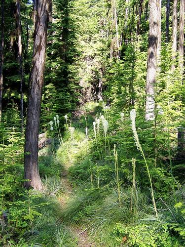 Trail 385 to Sacajawea Peak