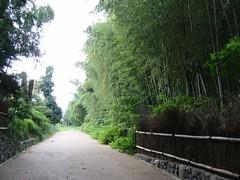 嵐山之散步 / Arashiyama