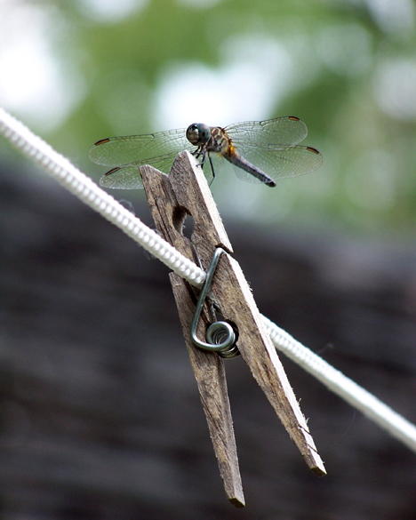 Dragonfly & Clothespin