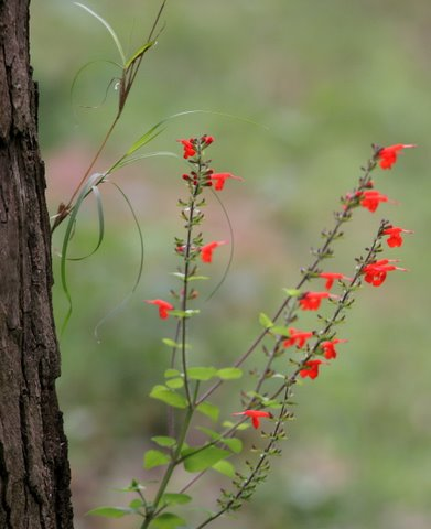 un id flower Nandi Hllls