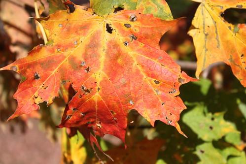 UW Arboretum - Colored and Holed
