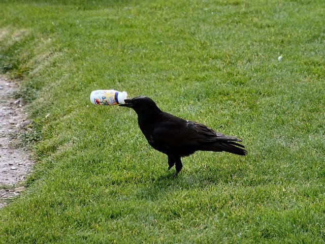 Spoiler Bird
