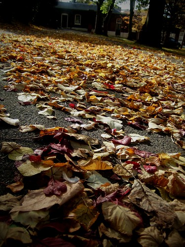 A Carpet Of Leaves, Red, Gold and Brown