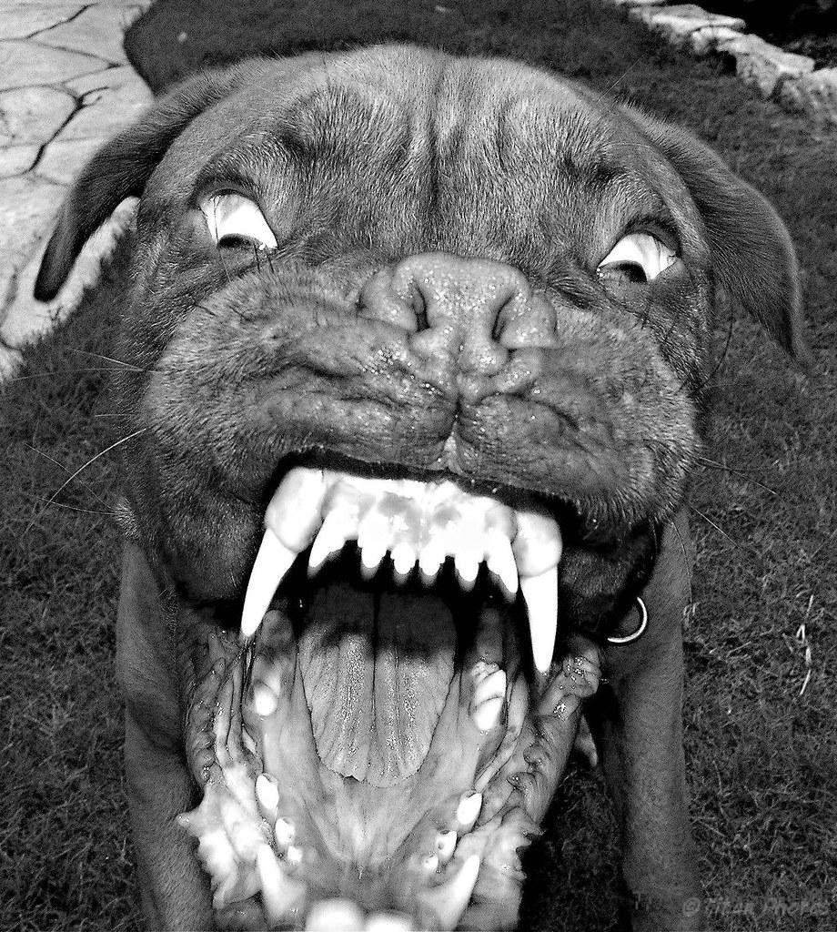 Dog Scary Devil Drawing Big