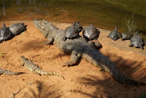 Yacares (kaaimannen) en schilpadden in vogelpark Brazilie