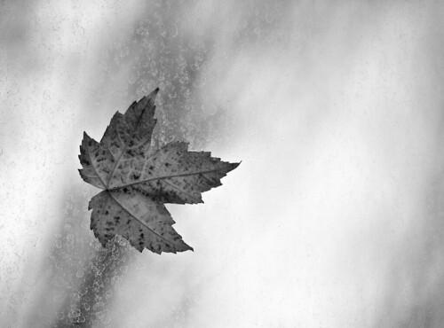 Leaf on Dirty Glass B&W