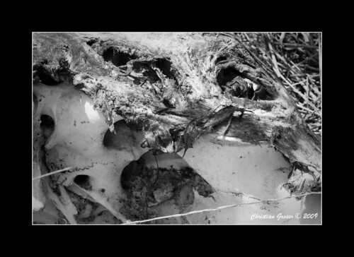 "Muerte en el Campo • <a style=""font-size:0.8em;"" href=""http://www.flickr.com/photos/20681585@N05/3424958637/"" target=""_blank"">View on Flickr</a>"